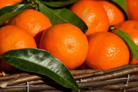 ☆畑直送☆大特価!こだわり有機栽培野菜8品セット+畑で採れた果物をプレゼント‼️