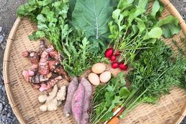 《高知県・中里自然農園》無農薬/お野菜詰め合わせBOX(8〜10種類)
