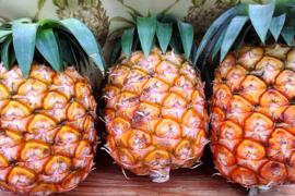 【残り僅か】無農薬パイナップル(ピーチパイン) 小玉 2個