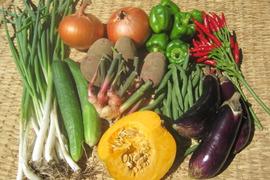 お米と季節の野菜(10品目前後)のセット