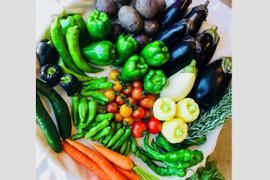 旬の無農薬野菜セット(10品目)