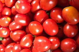 【期間限定☆】カラフルミニトマト(500g)