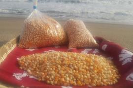 【2018年新物】農薬・肥料不使用*ポップコーン3kg