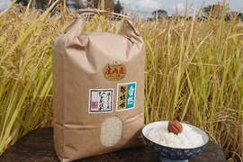 【7分つき精米 | 20kg】米の旨味たっぷり 自然栽培米 ひとめぼれ