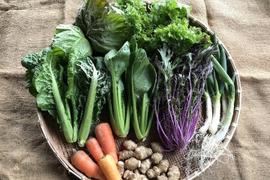 旬の無農薬・有機栽培野菜セット(7〜10品目)