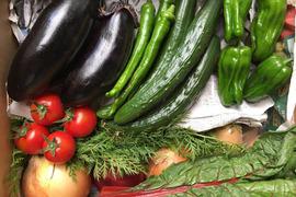 【せと自然農園】旬*お試し野菜セット(7品目)