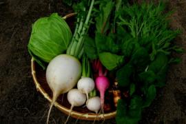 四季の無農薬野菜セット(7~8種)