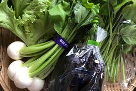 岩手からお届け〜季節のお野菜セット(7品ほど)