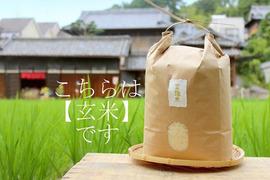 【金鵄米/玄米】冷めても美味しいヒノヒカリ きんしまい(10kg)