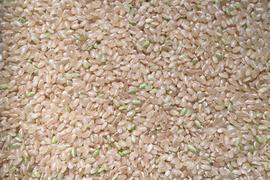 アイガモ米 玄米5㎏ 新米