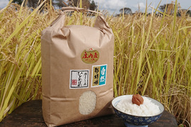 【上白精米 | 10kg】米の旨味たっぷり 自然栽培米 ひとめぼれ