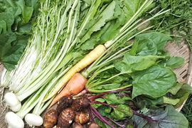 シャキシャキポリポリ!元気いっぱい露地野菜セット(5~6品)