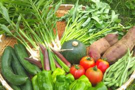 甘くて美味しい♪季節野菜の8品セット