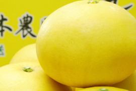 【完熟!】河内晩柑/大玉(3kg)