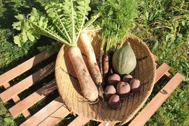 レシピ入り【自然栽培】野菜セット2〜3人家族用(5品)
