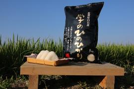 【29年度】学のひのひかり(玄米5kg)