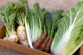 【鍋にオススメ♪】冬野菜セット2〜3名用(約5品)