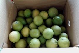 【有機JAS】レモン ご家庭用(2kg)