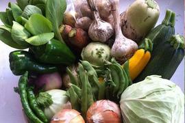 《丹波の旨味》なゆた農場の四季菜セット【M】