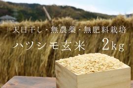 【無農薬・無肥料 生命力溢れる】ハツシモ玄米2kg