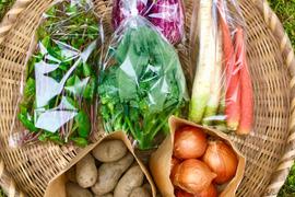 【無農薬】採れたての旬の野菜*小(5-8品目)