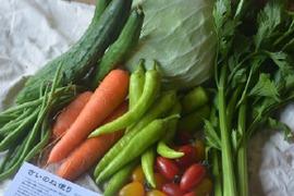 【お中元用・熨斗つき】さいのね畑特選!お野菜セット[小]