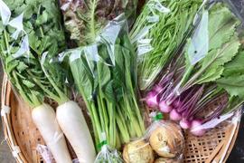 富士山の麓で採れた露地野菜セット(6〜8品)