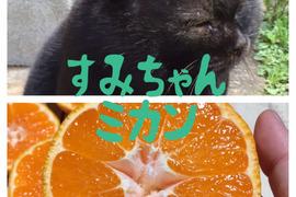 【完全無農薬】大きな青島みかん!美味しい湯河原産