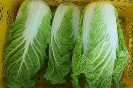 無農薬*ミニ白菜~5kg*12/27~1/4お休み