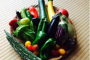 【アルプス 八幡農園】旬*お試し野菜セット(6品目)