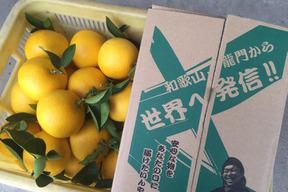 【和歌山産】完熟!生成り八朔(10kg)