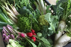 【もりとう農園】お野菜玉手箱(中)*(約6~8品)