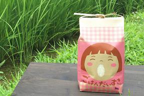 古代の稲作発祥の地からお届けする「医農米こしひかり」【白米】5kg