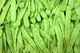 無農薬モロッコインゲン&四角豆&緑なすの豆豆セット