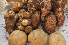 カラダに優しい冬の根菜セット(2kg)