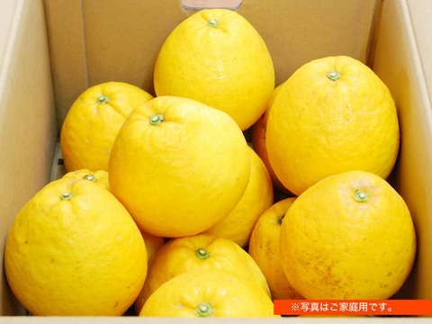 【完熟!】河内晩柑 大玉 [2L以上] 3kg(約6個)