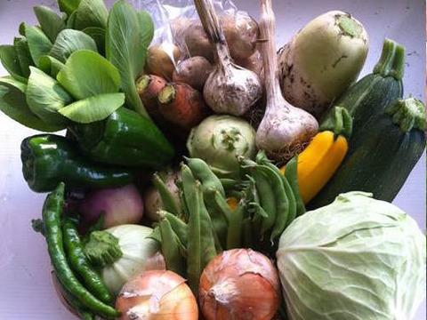 《丹波の旨味》なゆた農場の四季菜セット【S】