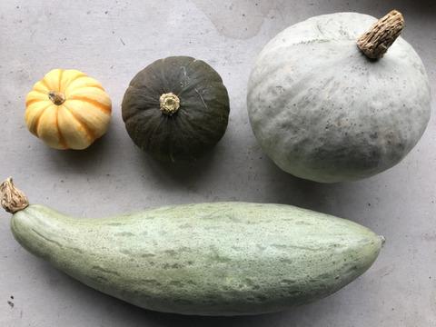 高級かぼちゃ・珍かぼちゃ4種セット