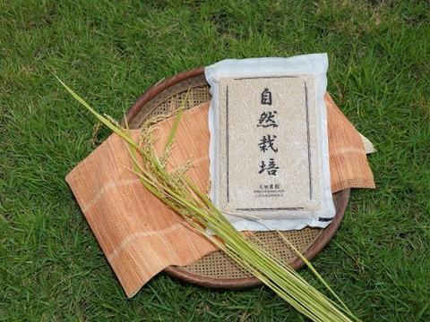 ※11月~新米販売開始【名水に育まれた自然栽培米】『元田旭』精米4.5㎏