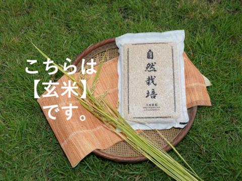 ※11月~新米販売開始【名水に育まれた自然栽培米】『元田旭』玄米   5㎏