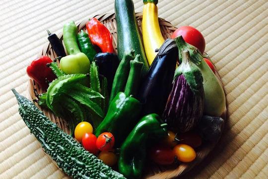 【アルプス八幡農園 】完全無農薬*お試し野菜セット(6品目)