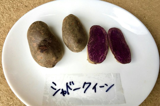 """万能系!""""ひね""""じゃがいも 5種食べ比べセット(各500g 合計2.5kg)"""