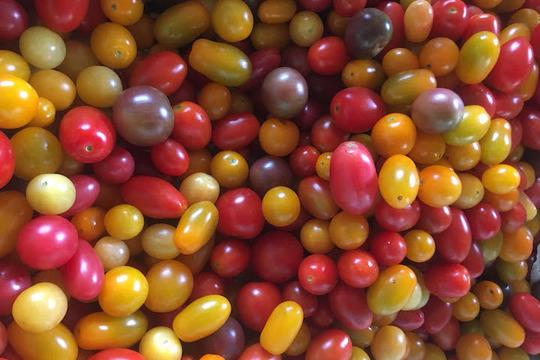 【期間限定7月〜9月末迄】自然栽培ミニトマト12種ミックス(500g)