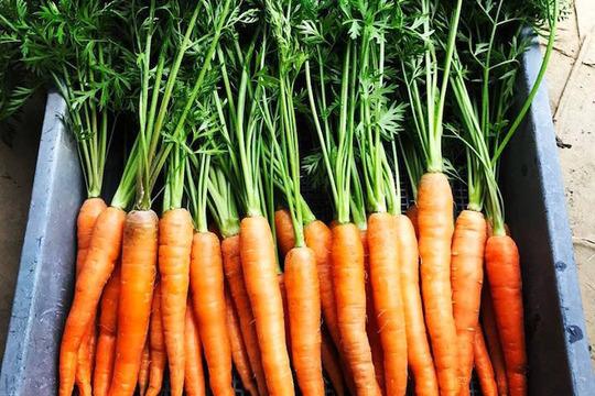【福岡県糸島産】朝獲れ*無農薬野菜セット(7品前後)
