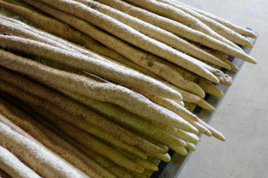 自然薯(じねんじょ) 約500g (小)