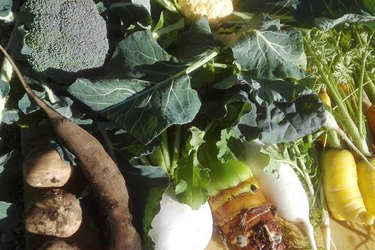 【今が旬!】冬のお野菜セット(5〜6品)