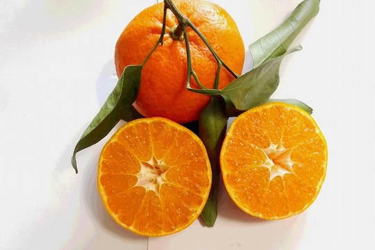 【有機JAS】高糖度の高級品種!甘平(4kg)