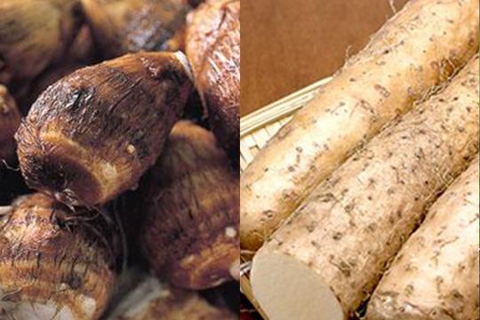 【アルプス 八幡農園】完全無農薬*長芋と里芋のセット各1.5kg
