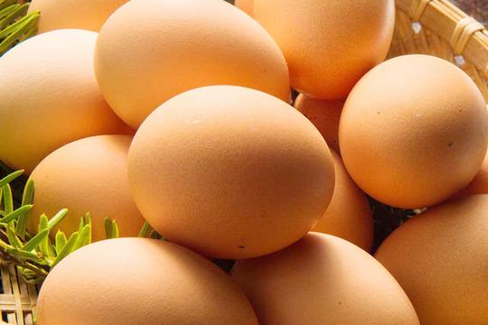 【湘南】卵ソムリエの放し飼い自然卵2パック【20個】