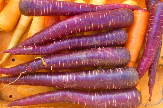 《北アルプス産》甘さが特徴!紫人参(1kg)